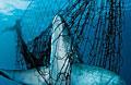 shark-net_110511