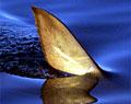 sharkFin_200904