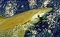 shark_020506