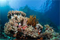 soft-coral_241011