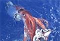 squid_130511