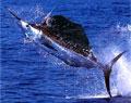 swordfish_180206