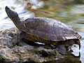 turtle_010409