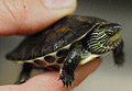 turtle_010907