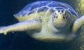 turtle_020310