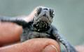 turtle_040906