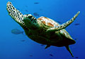 turtle_050109