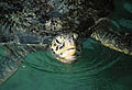 turtle_060306