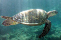 turtle_111006