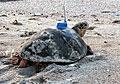 turtle_120711