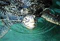 turtle_140307
