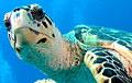 turtle_140408