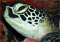 turtle_190407