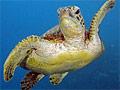 turtle_230308