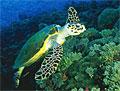 turtle_240906