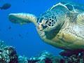 turtle_270404