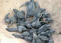 turtles_090506