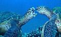 turtles_green_080406