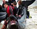 wetsuit_warriors_060605