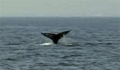 whale-med_110510