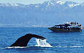 whale-watching_270306