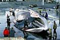 whale_010309
