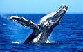 whale_050506