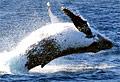 whale_210108