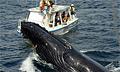 whale_221107