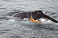 whale_241206