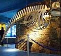 whale_museum_180505