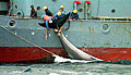 whalers_100603