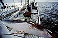 whaling_290705