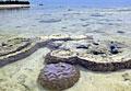 zanzibar-coral_170310